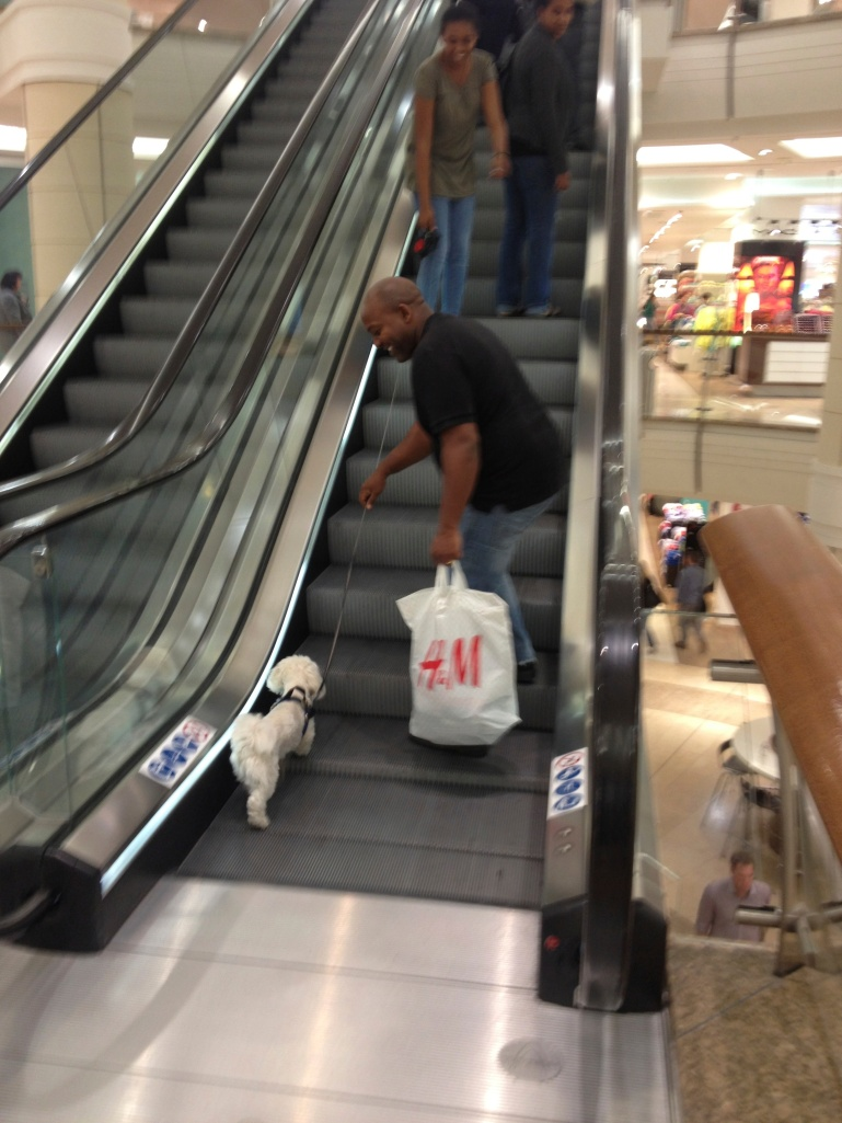 Yes, that is a dog - on an escalator, in a very nice mall!