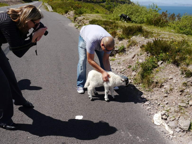 We had been driving when Renee noticed a sheep along the side of the road. Amazingly, it was actually a lost sheep whose owner had just found it! He let John and Renee hold and take pictures of the sheep!
