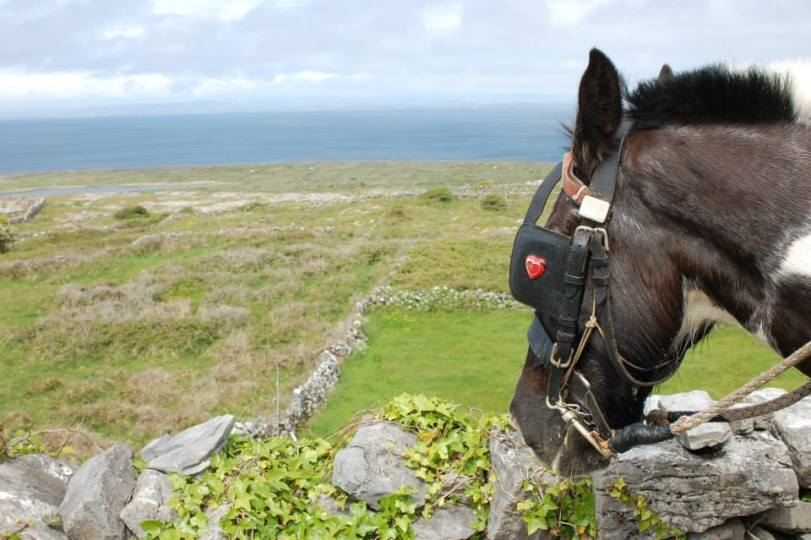 Our horse on the tour with the gorgeous landscape in the background!