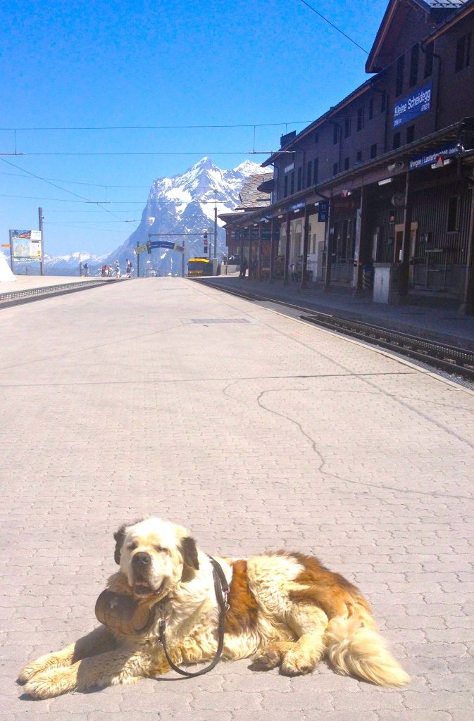 On our way back down we finally saw one of the famed St. Bernards!!