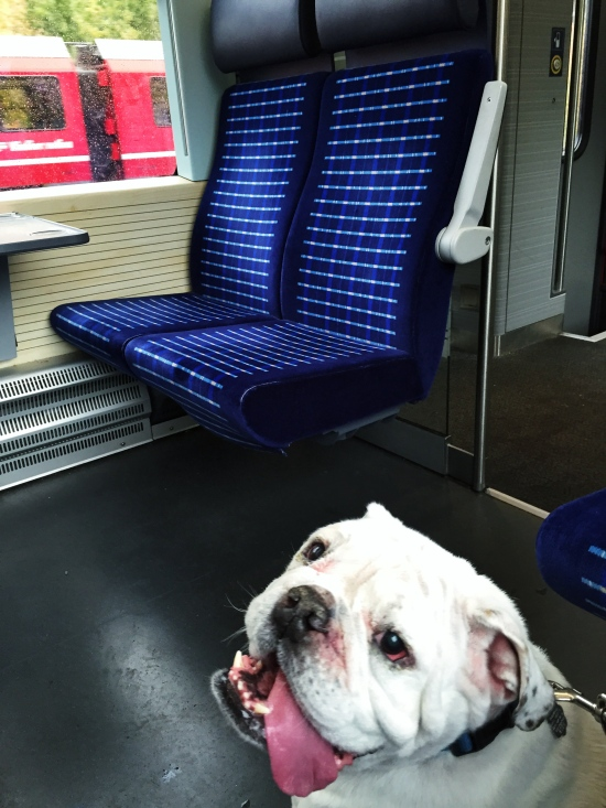 Caesar loved his train ride!